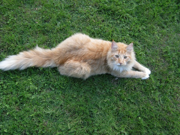 Photo of Copernicus posing on the grass