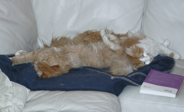 Photo of Copernicus and Galileo sprawled on the couch together