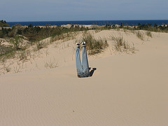 Photo of sandy dune with person buried upside down to waist in sand
